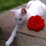 Cat relaxing in backyard Barrie