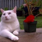 Cat with his plant in a back yard barrie