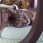 Sleepy Cat Rests on a chair in Barrie