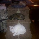 3 Pets relaxing on a stand in Barrie