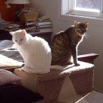 2 cats bathing in the sun in Barrie