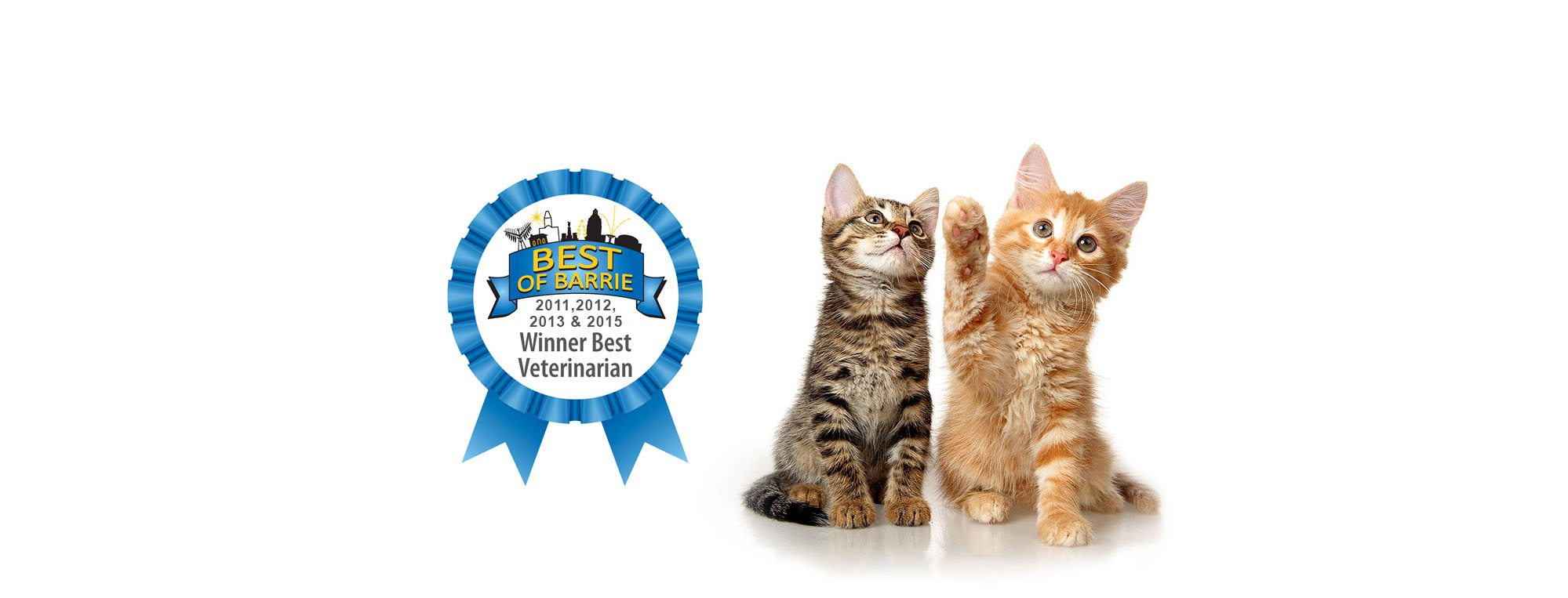 Best Of Barrie cats award