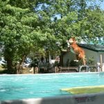 Beautiful dog making a splash at our Barrie Vet Clinic