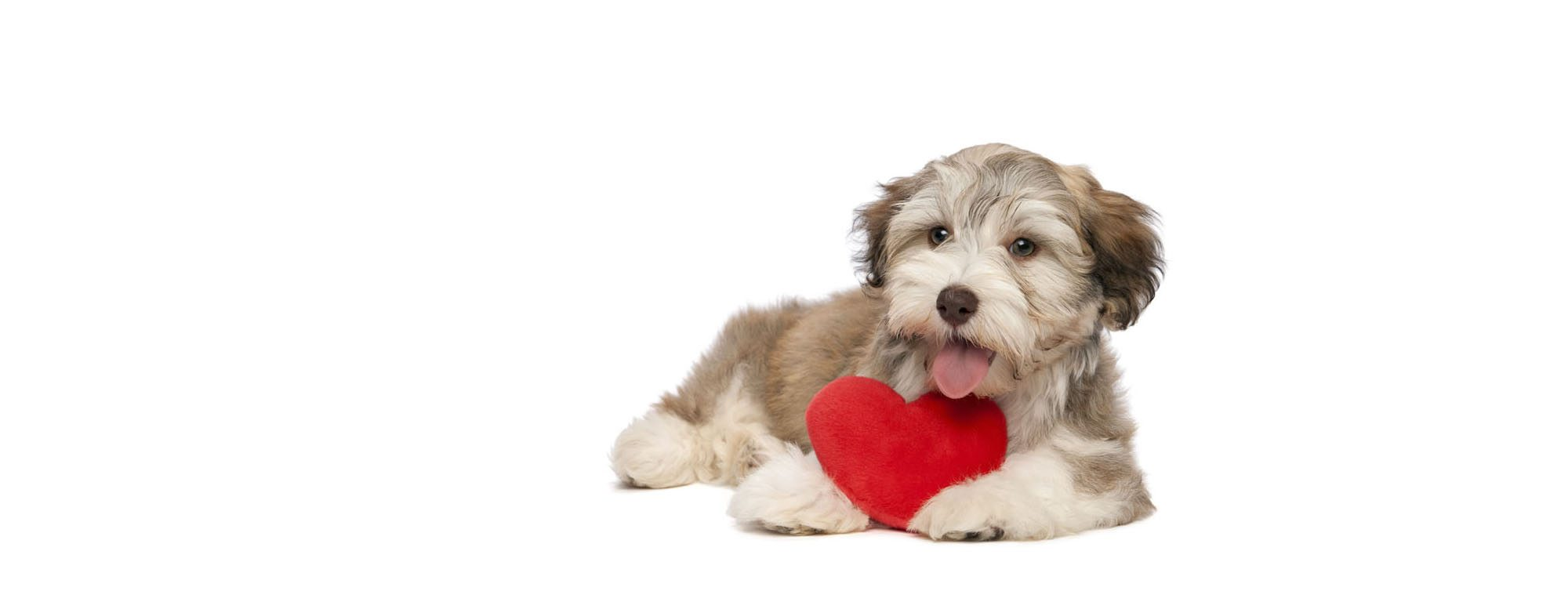 Dog with heart at Essa Veterinary Services Barrie Full Logo